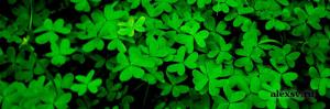 коммуникативные функции зелёный цвет