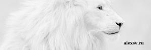 коммуникативные функции белый цвет