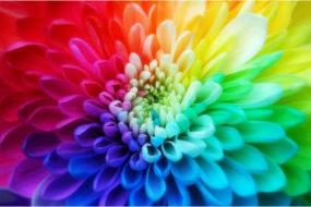 Вдохновение цветом для оформления чего угодно