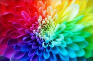 цветок разноцветный картинка