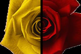 Выборочная коррекция цвета в Photoshop